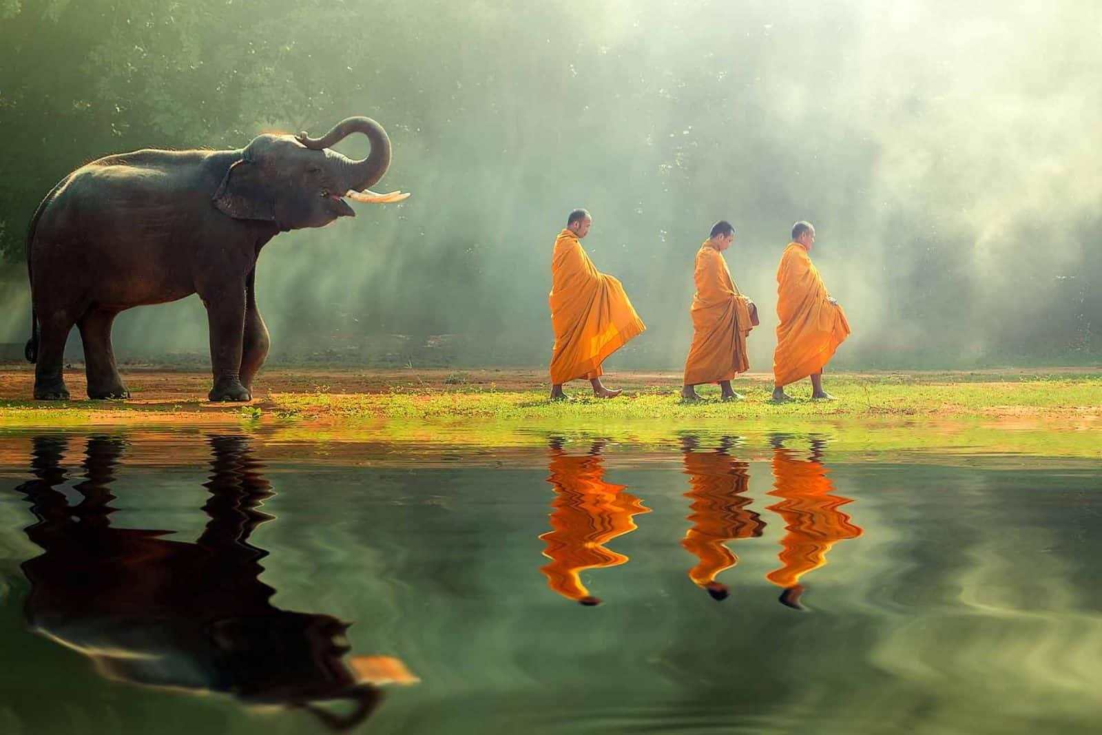 Monks&Elephant_WEB