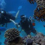 Diving in Ko Phi Phi