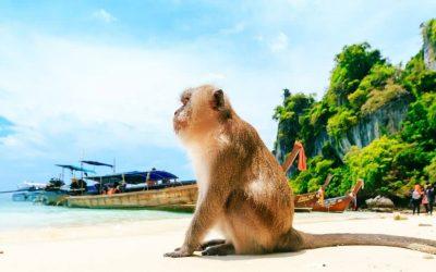 monkey beach phi phi