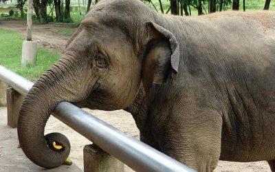 Phuket Elephant Jungle Sanctuary