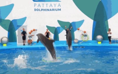 pattaya dolphinarium